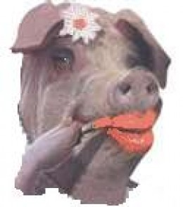 Why would you ever want to paint up a pig?