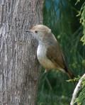 Birds of the world. A-Z of bird genera part-2