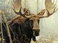 A moose is a beautiful creature to one of its own, in its own right, and much more so than in the eye of a hunter.