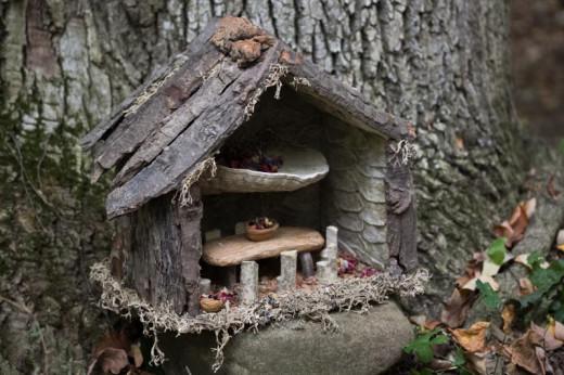 Bark, shelf mushroom, twigs