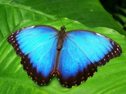 The Butterfly Effect: Where Are You Today?