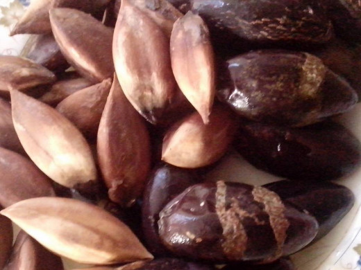 PILI NUTS Photo Source: Ireno Alcala
