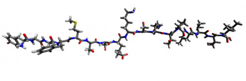 Endorphin Molecule