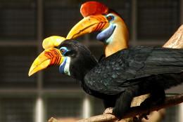 Taken at Walsrode Bird Park Germany.