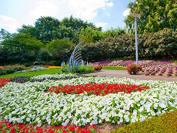 The colours of Roma Street Parklands. Image from visitbrisbane.com.au