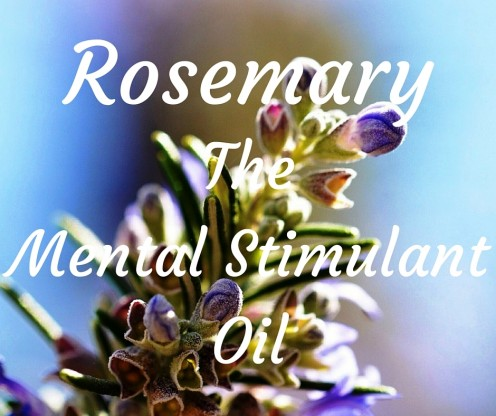 Rosemary improves circulation to the brain. One of many aromatherapy uses.