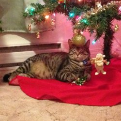 Our cat Sheldon relaxing under the tree.