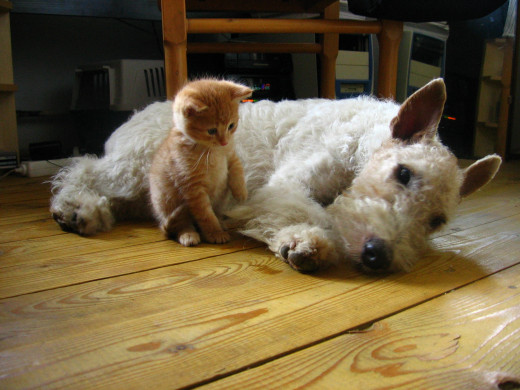 Dogs and Cats do live together