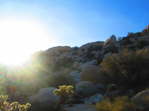 Sun shining down on the cholla cacti and boulders.