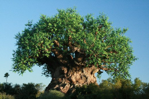Animal Kingdoms Tree of life during the summer