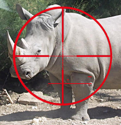 Trophy Hunting Fails Rhino Conservation, Supplies Poachers, And Perpetuates Fraud