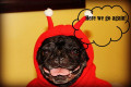 Five Reasons Your Dog May Hate Halloween
