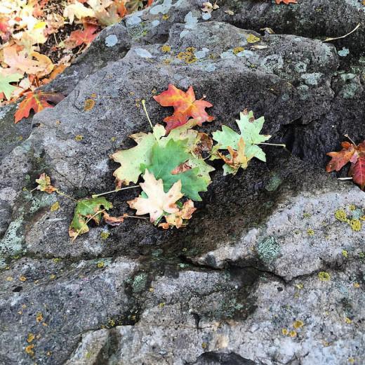 Autumn leaves - Alpine Loop  Personal Photo REK
