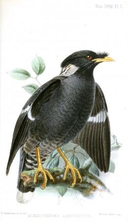 Illustration by John Gerrard Keulesmans. Creative Commons.
