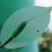 lal udita profile image