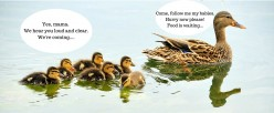 10 Budget-Friendly Ways to Raise and Feed Ducks