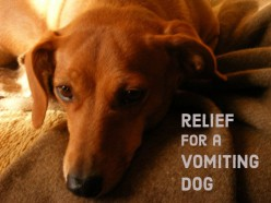 Home Remedies for Vomiting Dogs