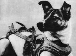 Space Dog Laika