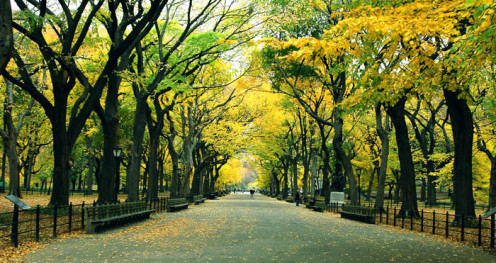 New York City has more than 1700 parks!