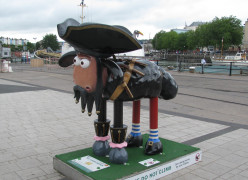 A Pirate or a Sheep or neither?