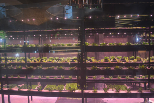 Belgium displayed sustainability. Veggies grown on top, while a tank of fish help fertizile the plants.