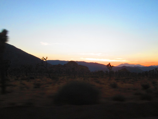 The view from the car of Joshua trees at sunet.