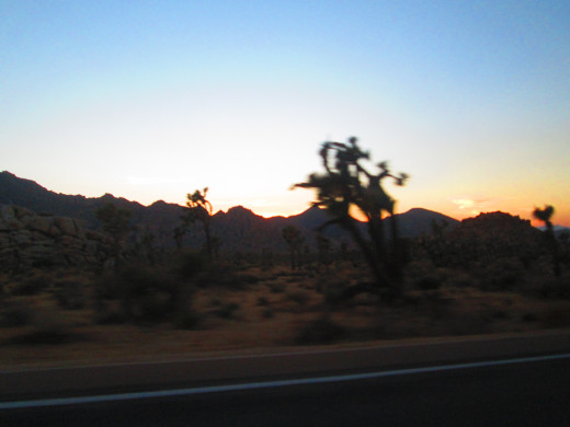 Joshua tree with orange hues in the sky.