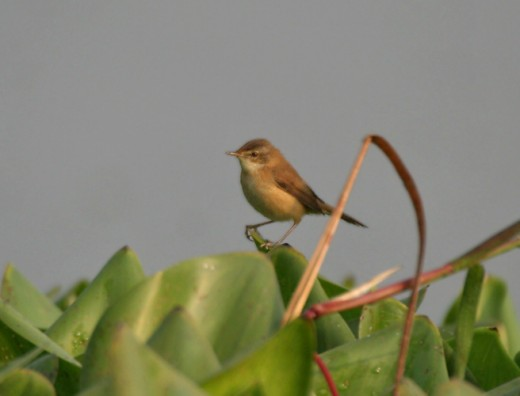 Taken in Kolkata ,west Bengal India.