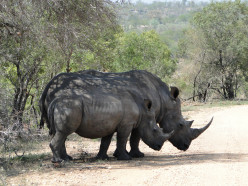 Kruger National Park -a visit in Spring 2015