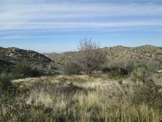 A small clearing filled with flaxen colored grass and chaparral.
