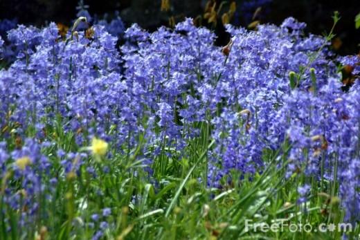 Poets like Wordsworth idolized flowers in verse.
