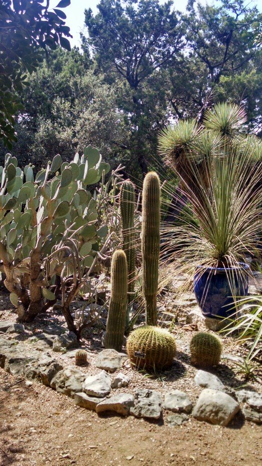 I could not get enough of seeing the cacti ....