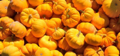 For the Love of Pumpkins - the must have Essential Oil