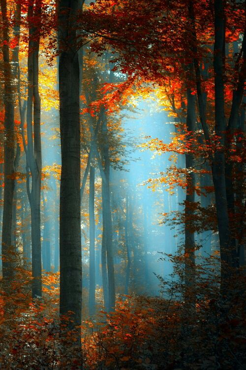See the light - Be the LIGHT shining thru the trees.