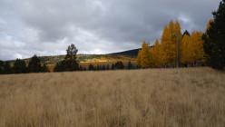 Fall in Flagstaff
