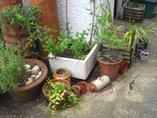 More money saving gardening tips part 3 hubpages - Money saving tips in gardening ...
