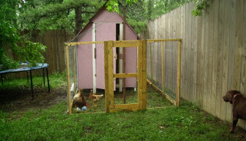 The chicken coop is situated in the SE corner of our yard.