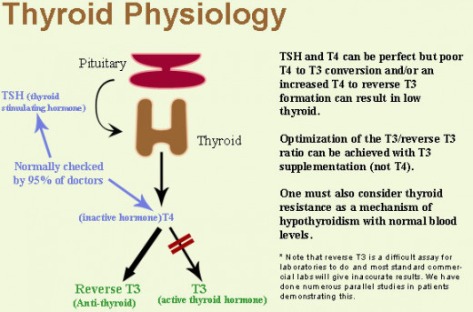 The physiology of T3 and T4