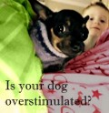 Is Sensory Overstimulation Stressing Your Dog?