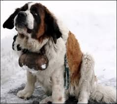 Sensible dog