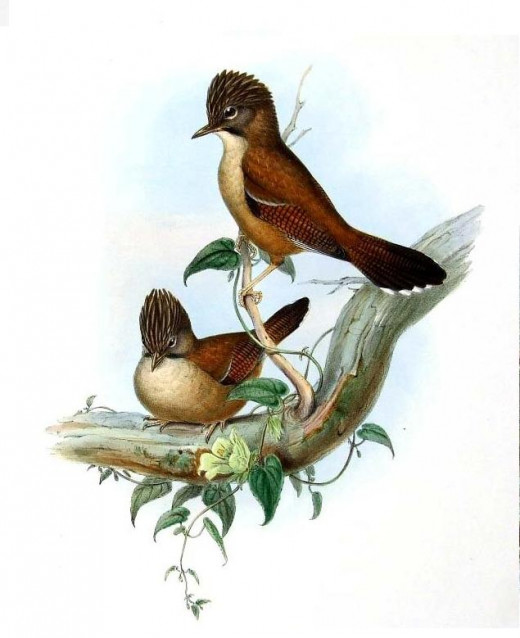 Birds of Asia,John Gould.