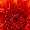LoriBeninger profile image