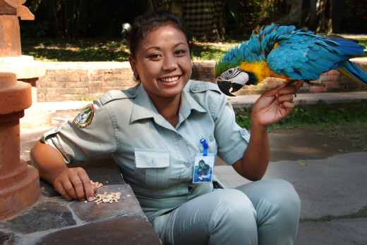 The people of Bali are warm and welcoming. Here we see a zoo keeper and her parrot, a blue and yellow macaw.