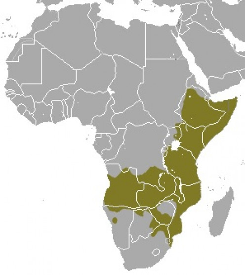 The green colour in this map represents the range of the common dwarf mongoose.