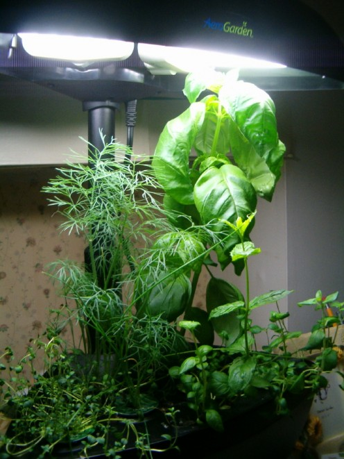 AeroGarden uses a hydroponics technique