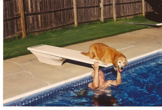 Swimming Pool With Man and Golden Retriever