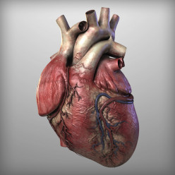 Pathology of the HEART - The Cardiovascular System