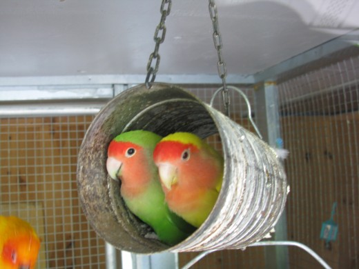These love birds share their love.