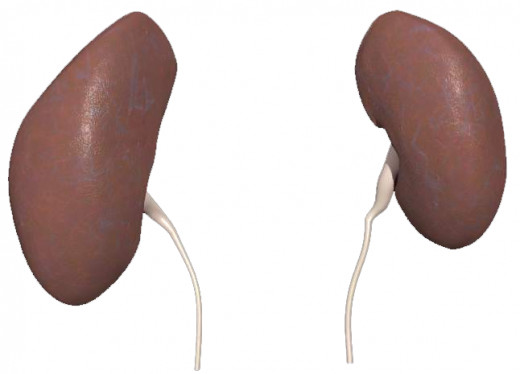 Protect your renal system