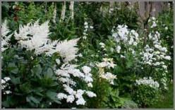 How To Plant An Evening Garden